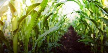Украина — супергерой на мировом рынке продовольствия 2100 года